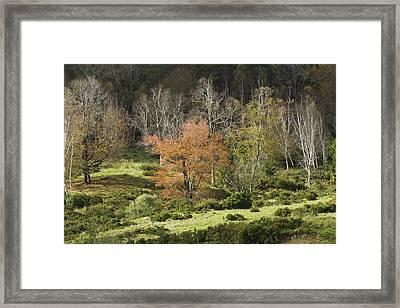 Maine Hillside Landscape In Fall Framed Print