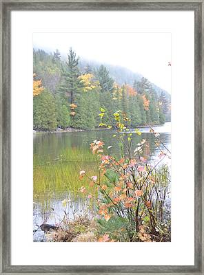 Maine Lake Colors Framed Print