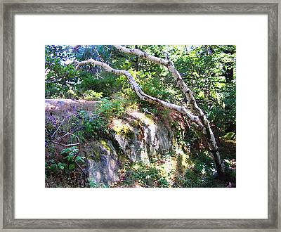 Maine Framed Print by Oleg Zavarzin