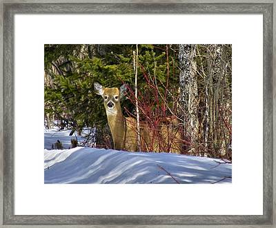 Maine Wildlife 2 Framed Print
