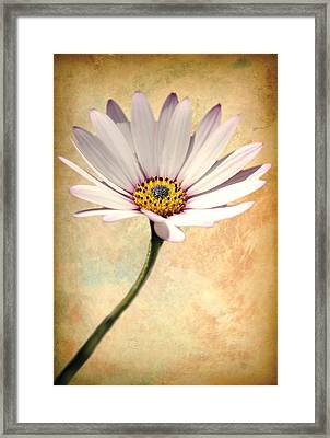 Maisy Daisy Framed Print by David Davies