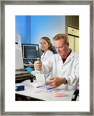 Maize Crop Genetics Research Framed Print by Stephen Ausmus/us Department Of Agriculture