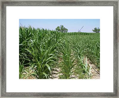 Maize Crop Irrigation Research Framed Print by Tom Trout/us Department Of Agriculture