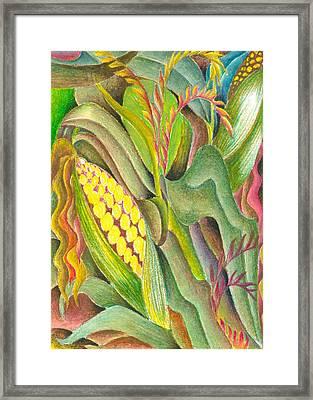 Maize Framed Print by Jaanaka Kandepola