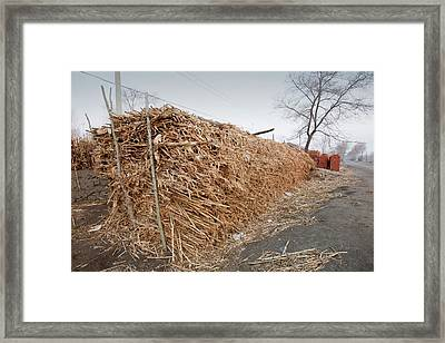 Maize Stalks Used For Biofuel Framed Print