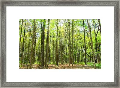 Majestic Trees In The Springtime Framed Print by Tina M Wenger