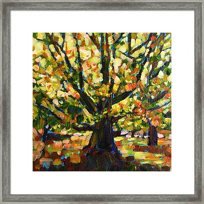 Majestic And Colorful Tree Framed Print