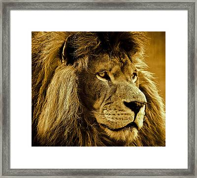 Soul Searching Framed Print