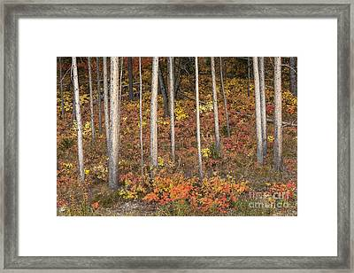 Majestic Autumn In The Grand Tetons Framed Print by Sandra Bronstein