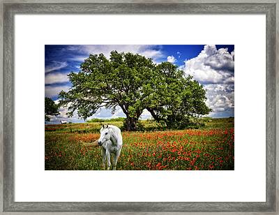 Majestic Beauty Framed Print
