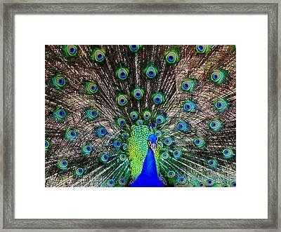 Majestic Blue Framed Print