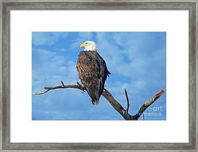 Majestic Framed Print by Bob Hislop