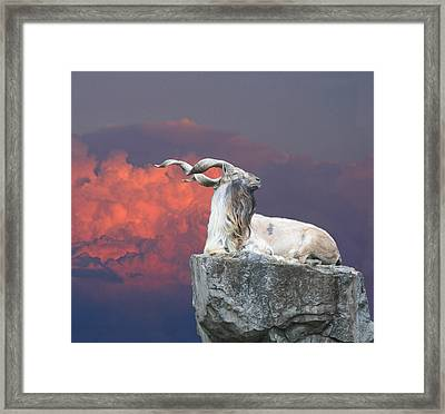 Majestic Framed Print by David Simons