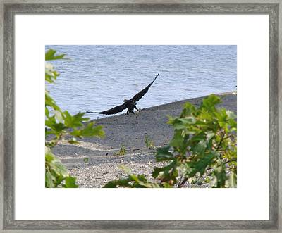 Majestic Dining Framed Print by Kristina Mitchell