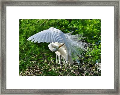 Majestic Egret Framed Print by Kathy Baccari