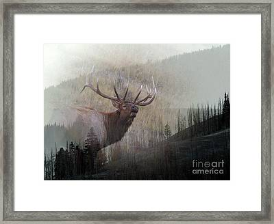 Framed Print featuring the photograph Majestic Elk by Clare VanderVeen