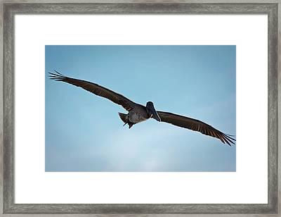 Majestic Flight Framed Print