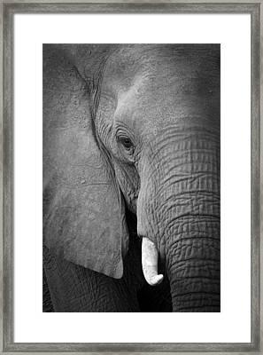 Majestic Giant Framed Print by Alison Buttigieg