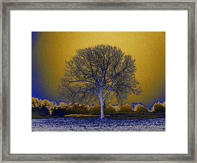 Majestic Gold Framed Print