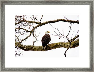 Framed Print featuring the photograph Majestic I by Trina  Ansel