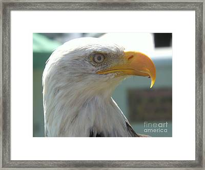 Majestic Icon Framed Print