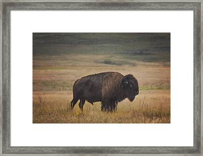Majestic Framed Print by Kimberly Danner