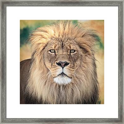 Majestic King Framed Print