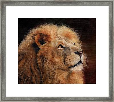 Majestic Lion Framed Print by David Stribbling