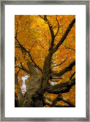 Framed Print featuring the photograph Majestic Maple by Gary Hall