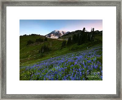 Majestic Meadow Framed Print by Mike Dawson