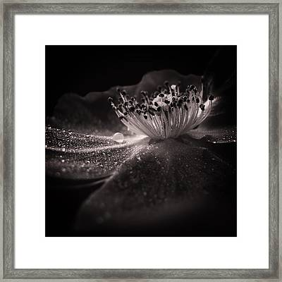 Majestic Monochrome Framed Print