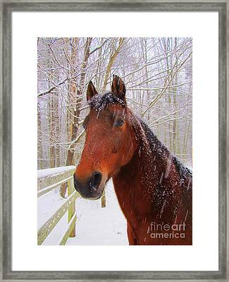 Majestic Morgan Horse Framed Print