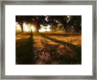 Majestic Oaks Sunrise Framed Print