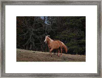 Majestic Palomino - Equine 0284e Framed Print by Paul Lyndon Phillips