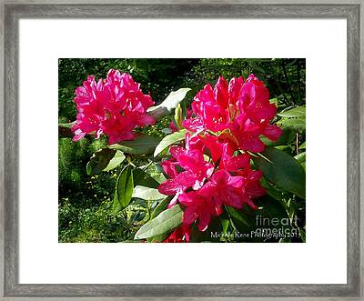 Majestic Pink Framed Print by Michelle Rene Goodhew