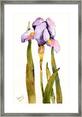 Majestic Purple Iris Framed Print
