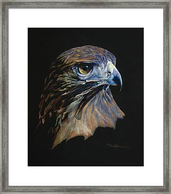 Majestic Raptor Red-tail Hawk Framed Print