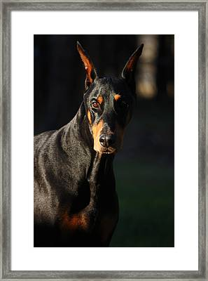 Majestic Framed Print by Rita Kay Adams
