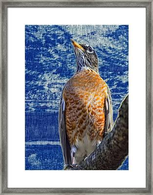 Majestic Robin Blues Framed Print by Bill Tiepelman