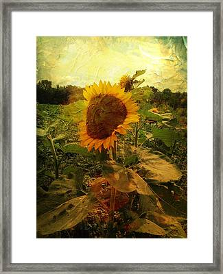 Majestic Sunflower  Framed Print