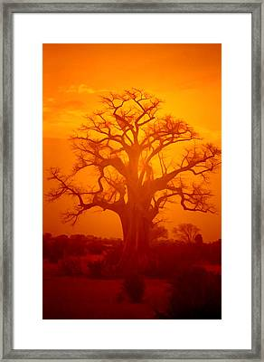 Majestic Sunset Tree Framed Print by Douglas Barnard