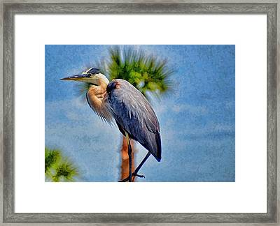 Framed Print featuring the photograph Majestic Tri-colored Heron by Pamela Blizzard