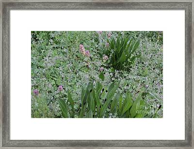 Majestica  Framed Print by Tim Rice