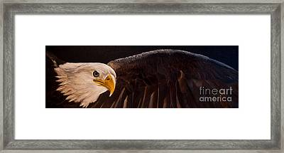 Majesty Framed Print by Julie Bond