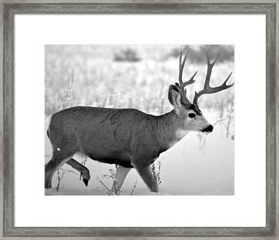 Majesty Framed Print by William Alsobrook