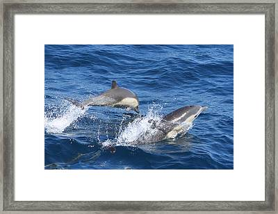 Make A Splash Framed Print by Shoal Hollingsworth