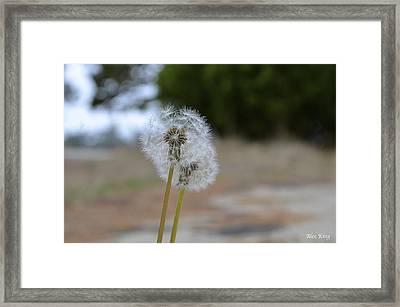 Make A Wish Framed Print by Alex King