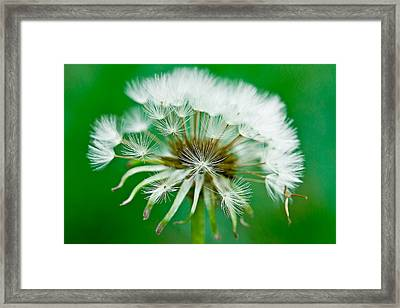 Framed Print featuring the photograph Make A Wish by Annette Hugen