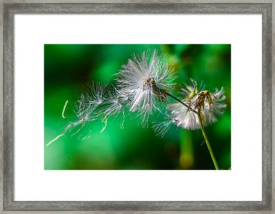 Make A Wish Framed Print by Brian Stevens
