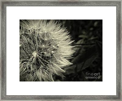 Framed Print featuring the photograph Make A Wish by Clare Bevan